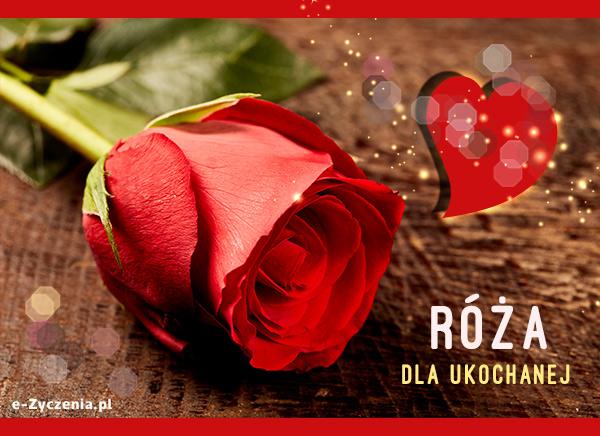 Ekartki Kwiaty Kartka Elektroniczna Róża Dla Ukochanej